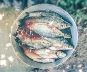 le poisson en anglais